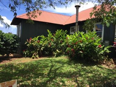 Hawaii Adventures Kauai Coffee Estate   Tayler's Edit