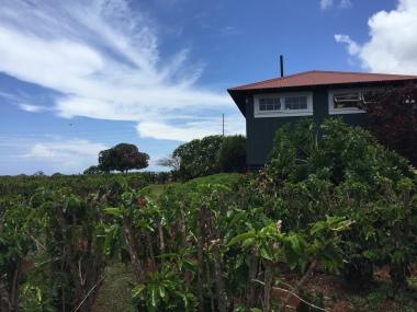 Hawaii Adventures Kauai Coffee Estate | Tayler's Edit